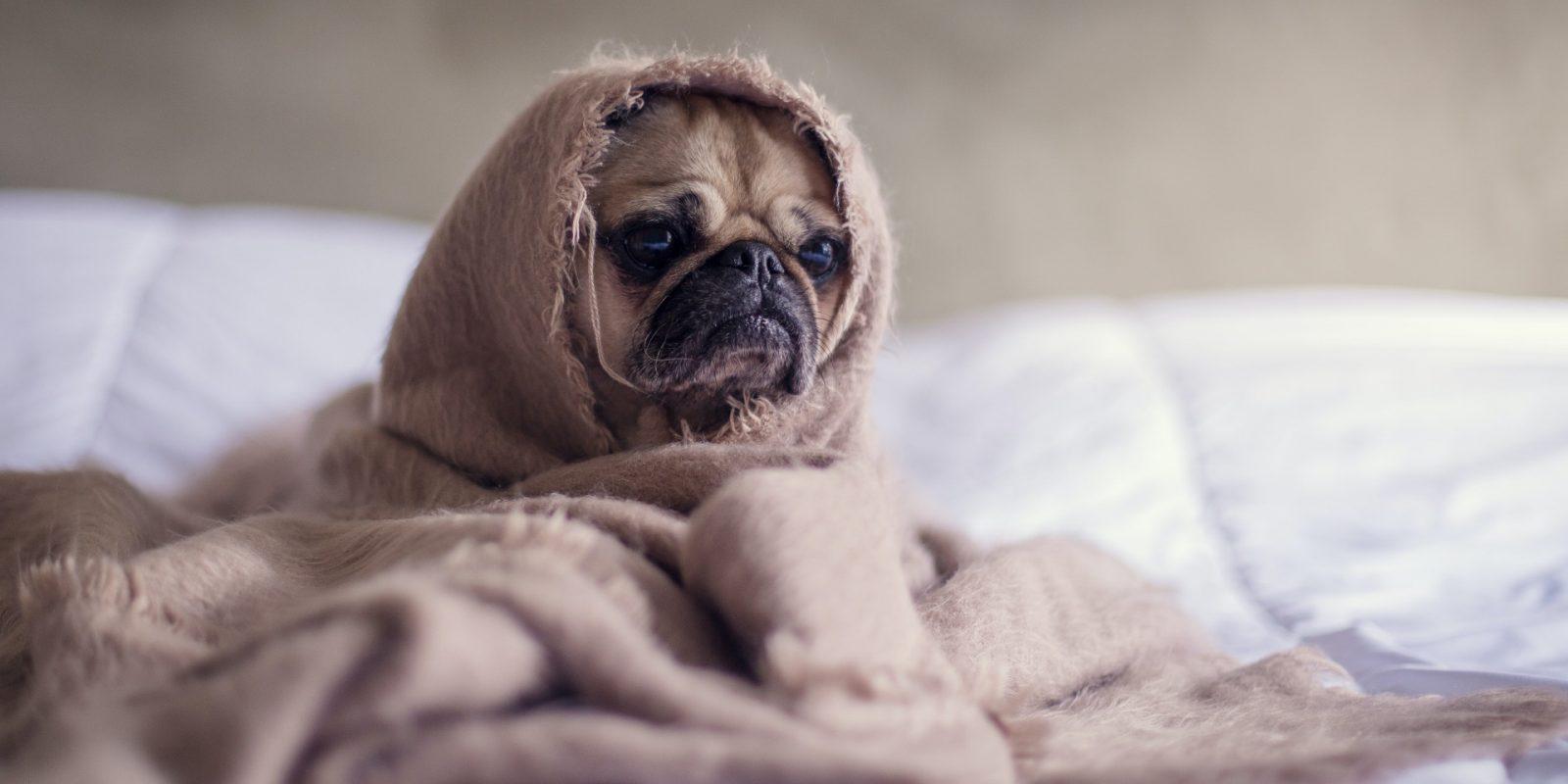 Depressieve Hond